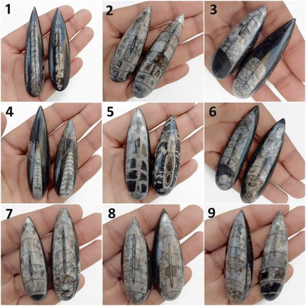 Natural Fossil Cephalopod Orthoceras Pear Shape cabochon Pairs Gemstone